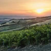 Tenuta di Trinoro: Neuer Weisswein aus der Toskana